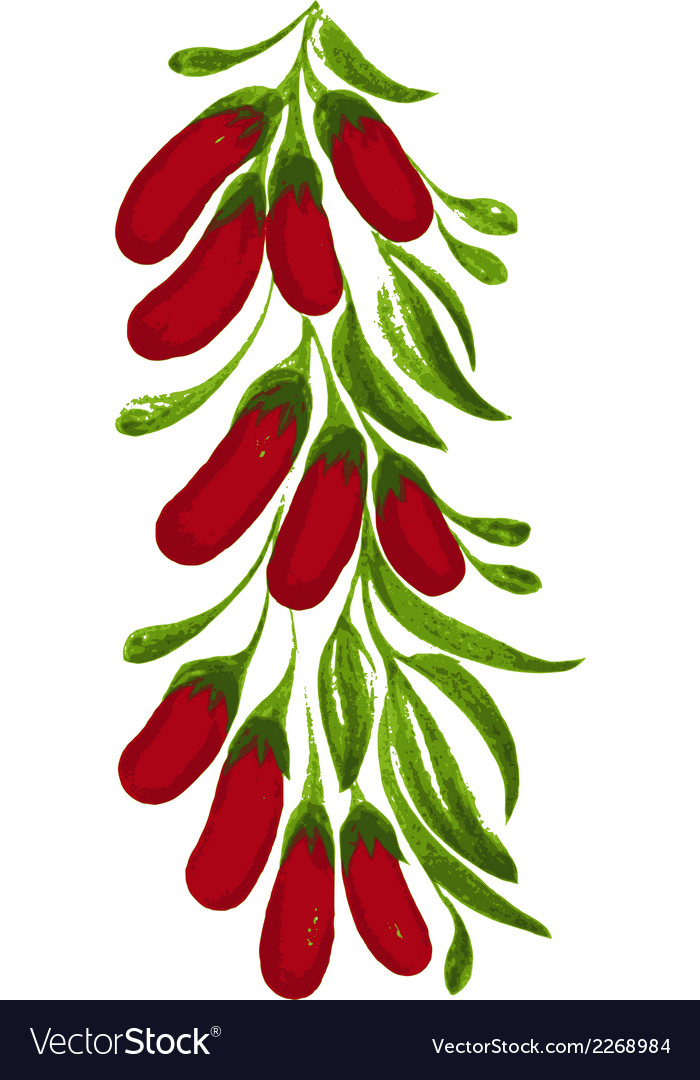 Decorative ornament branch with red berries vector | Price: 1 Credit (USD $1)