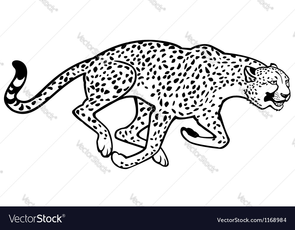 Running cheetah black and white vector | Price: 1 Credit (USD $1)