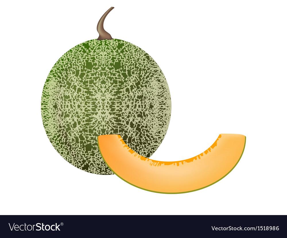 Cantaloupe vector | Price: 1 Credit (USD $1)