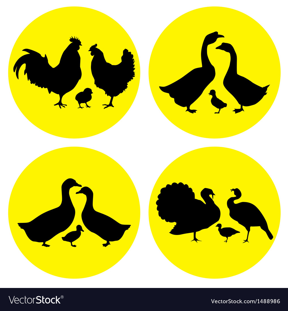 Family farm poultry vector | Price: 1 Credit (USD $1)