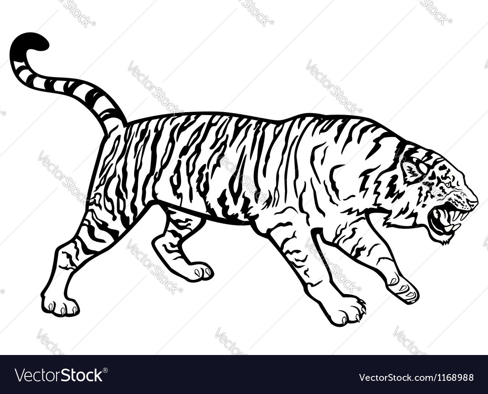 Tiger black and white vector | Price: 1 Credit (USD $1)