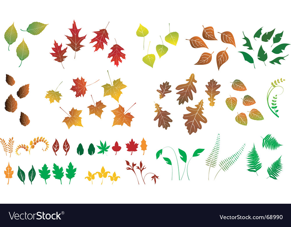 Leaf collection vector | Price: 1 Credit (USD $1)