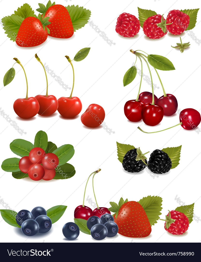 Summer berries vector | Price: 3 Credit (USD $3)