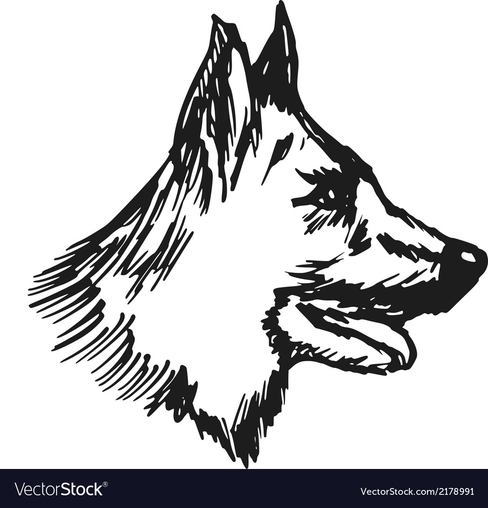German shepherd vector | Price: 1 Credit (USD $1)