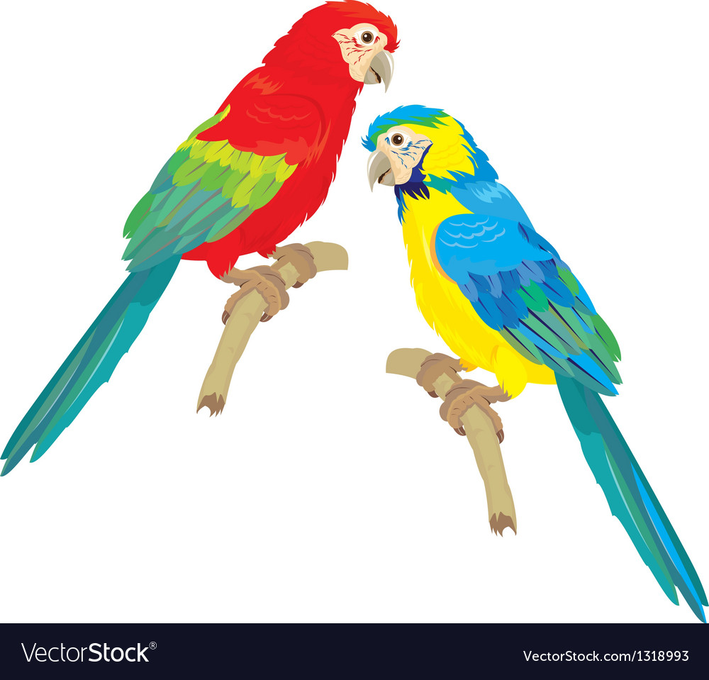Blue yellow and red blue macaw parrots vector | Price: 1 Credit (USD $1)