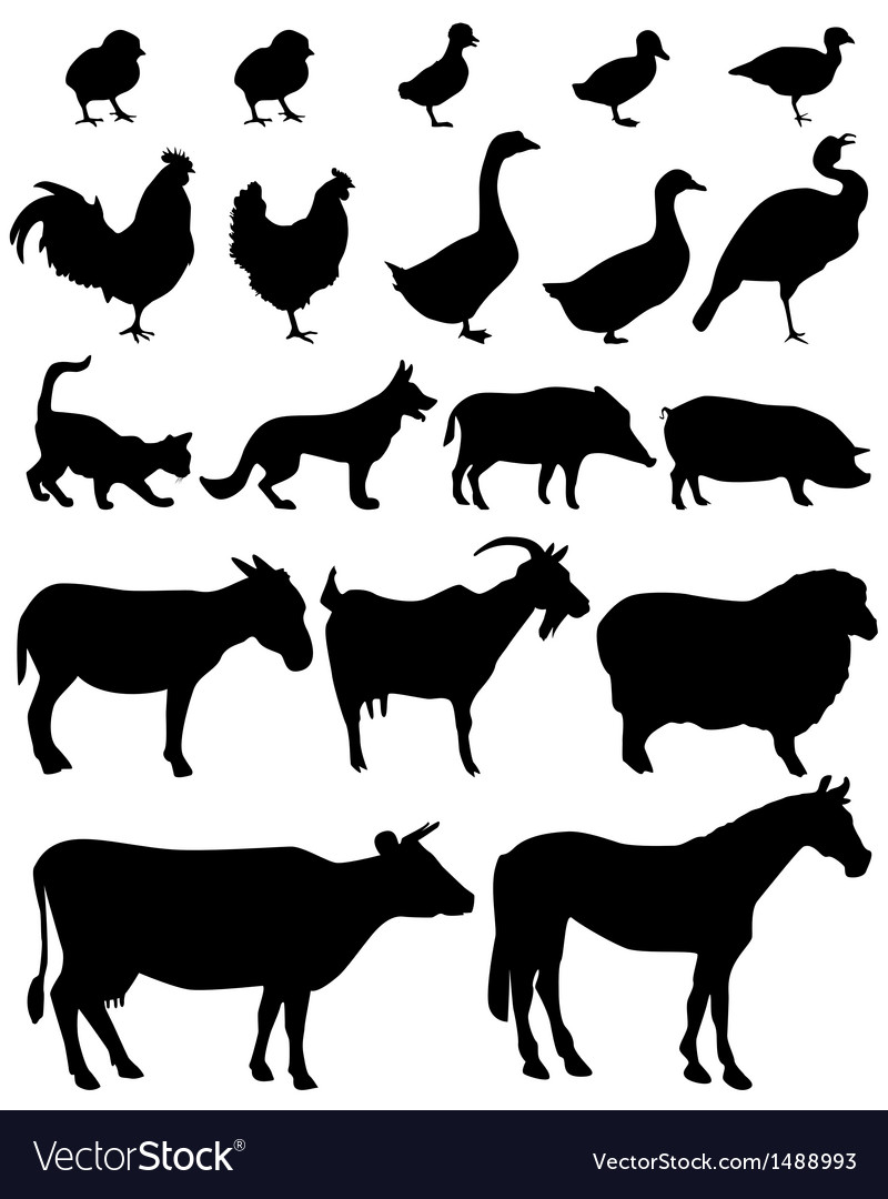 Farm animal vector | Price: 1 Credit (USD $1)