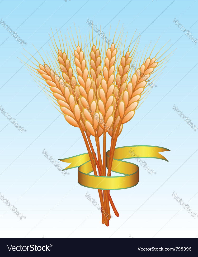 Wheat ears and golden ribbon vector | Price: 1 Credit (USD $1)