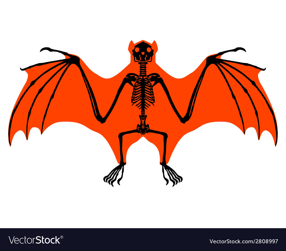 Bat skeleton vector | Price: 1 Credit (USD $1)