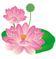 Realistic oriental lotus - a flower isolated with vector