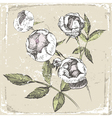 Hand drawn roses in old-fashioned style vector