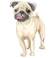 Pug breed vector