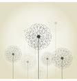 Flower a dandelion vector