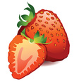 A beautiful ripe red fresh strawberry isolated on vector