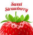 Poster sweet strawberries vector