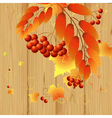 Leaves and berries vector