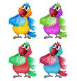 Four colorful parrots vector