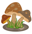 Mushrooms nature on a white background vector