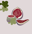 Figs and green leaves vector