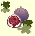 Figs vector