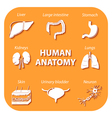 Set icons with shadow human anatomy vector