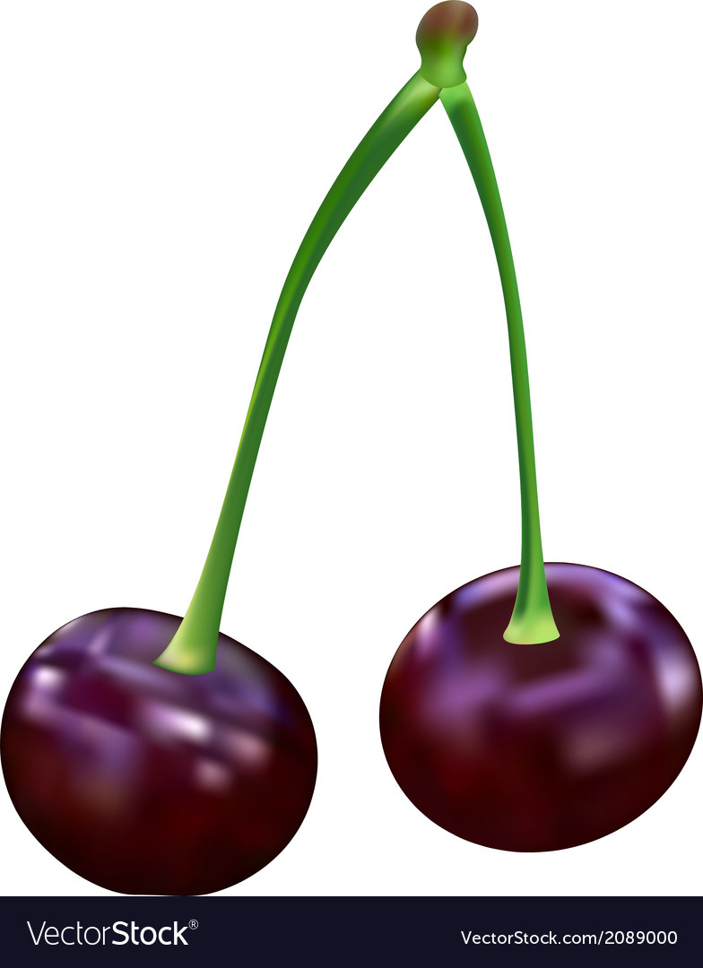 Cherry vector | Price: 1 Credit (USD $1)
