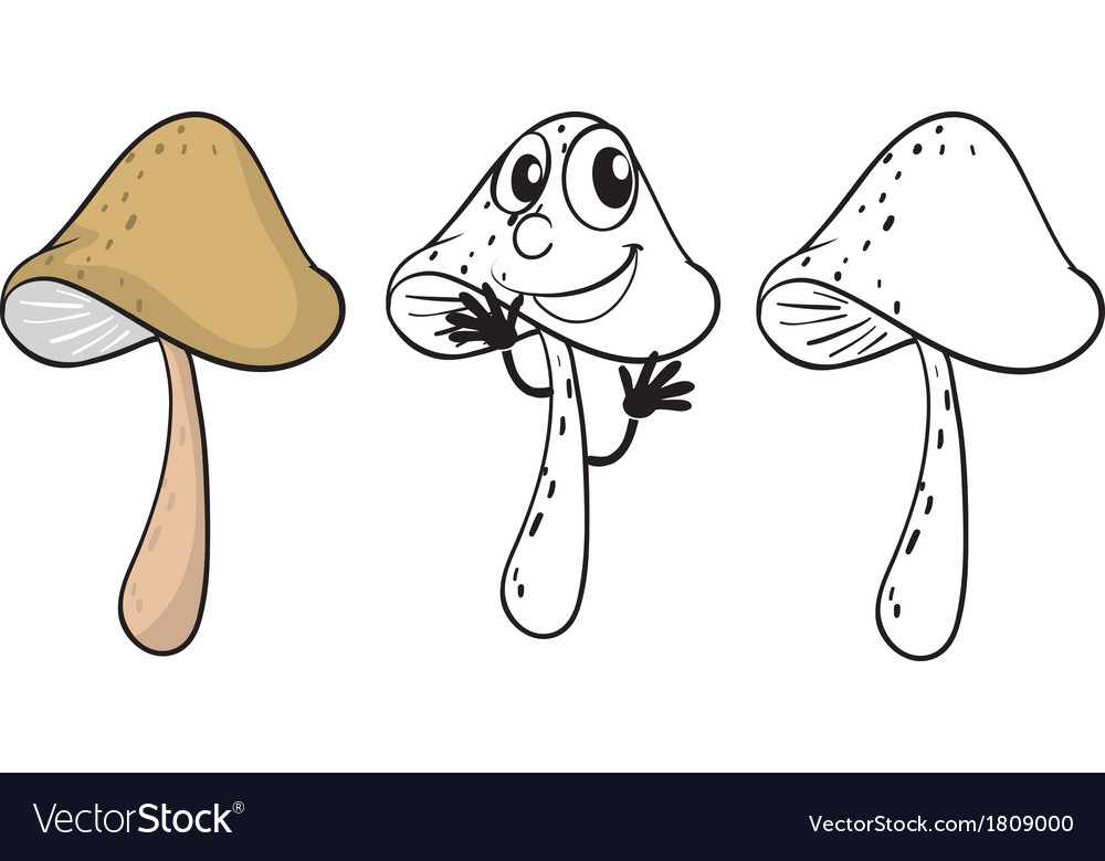 Three mushrooms vector | Price: 1 Credit (USD $1)