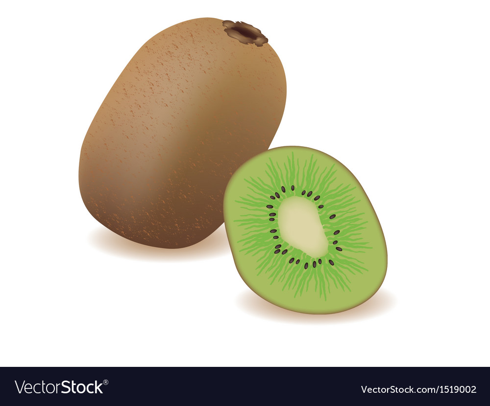 Kiwi vector | Price: 1 Credit (USD $1)