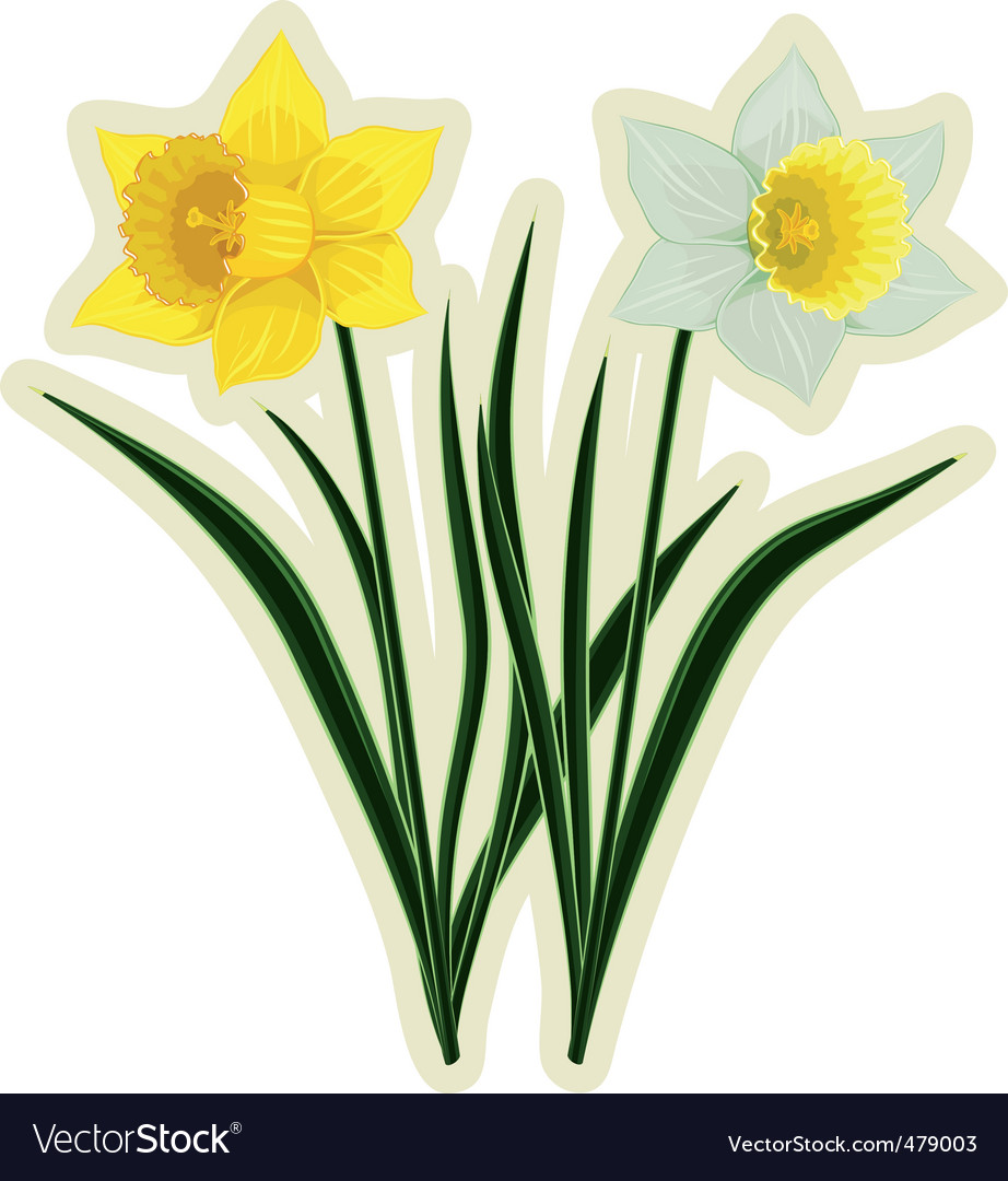 Yellow and white daffodils vector | Price: 1 Credit (USD $1)