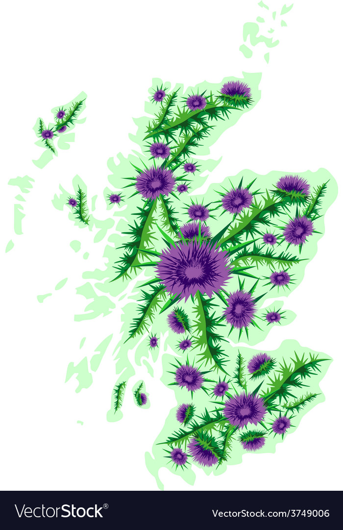 Image map of scotland with thistle flowers vector | Price: 1 Credit (USD $1)