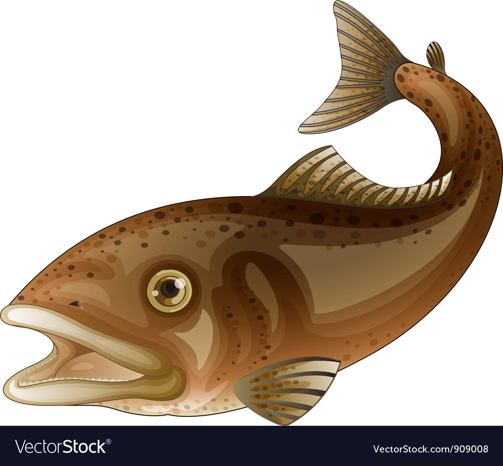 Trout vector   Price: 3 Credit (USD $3)