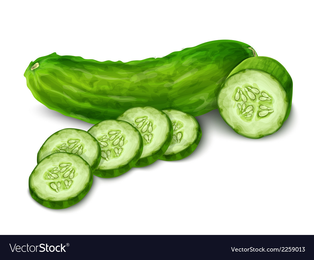 Cucumber isolated on white vector | Price: 1 Credit (USD $1)