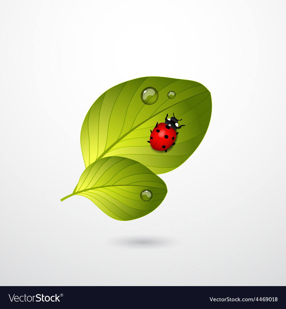 Two green leaves with red lady bug vector | Price: 1 Credit (USD $1)