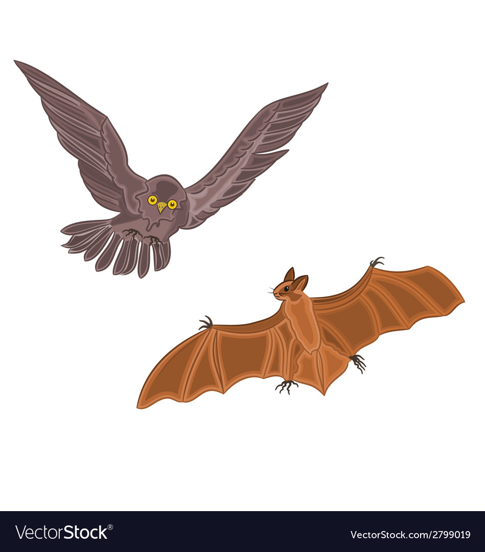 Halloween owl and bat vector | Price: 1 Credit (USD $1)