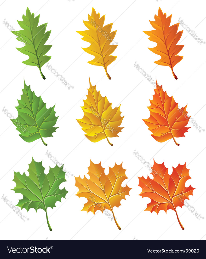 Set of autumn season leaves vector | Price: 1 Credit (USD $1)