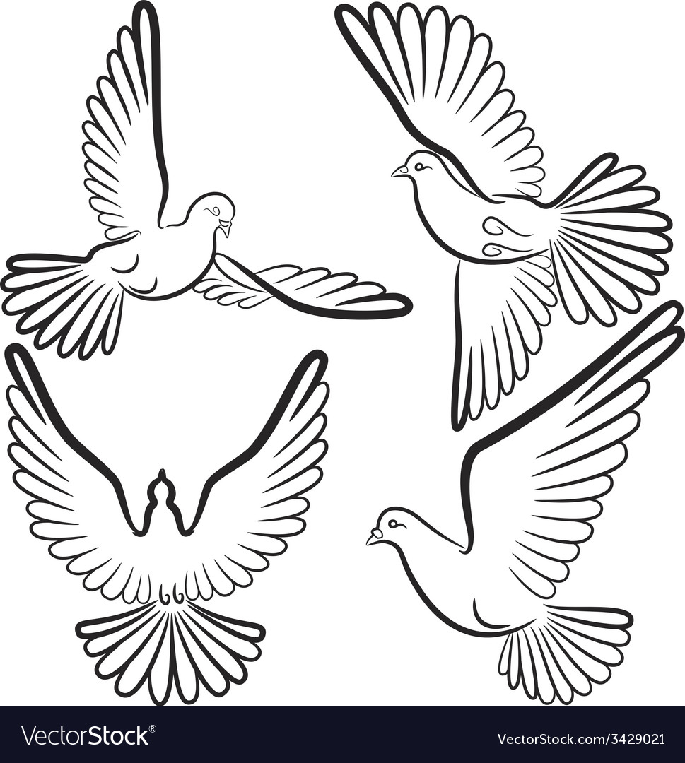 Black and white contours of four pigeons that fly vector | Price: 1 Credit (USD $1)