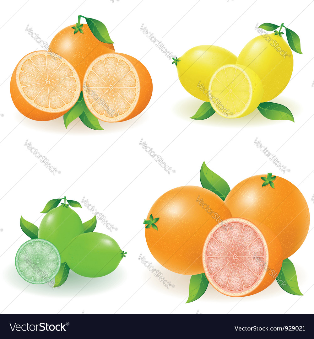 Set of citrus 02 vector | Price: 1 Credit (USD $1)