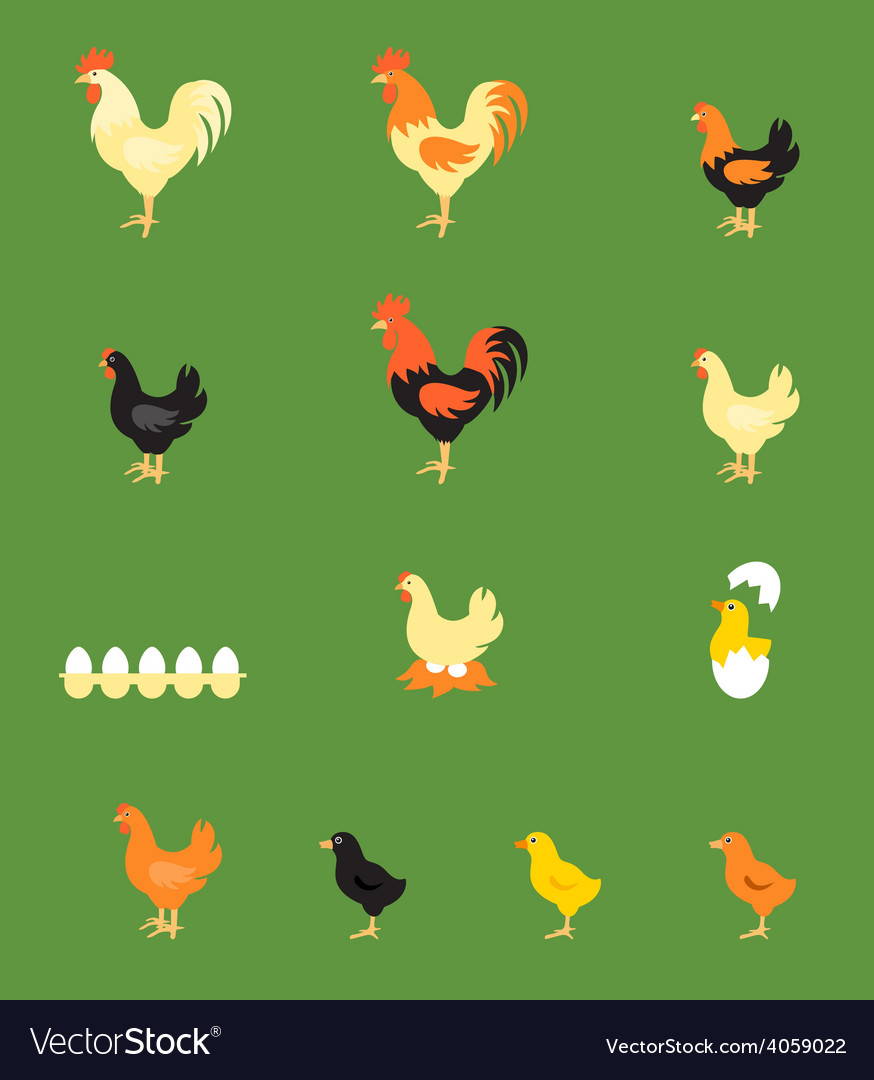 Rooster hen chick vector | Price: 1 Credit (USD $1)