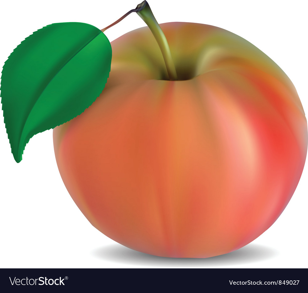 Apple vector | Price: 3 Credit (USD $3)