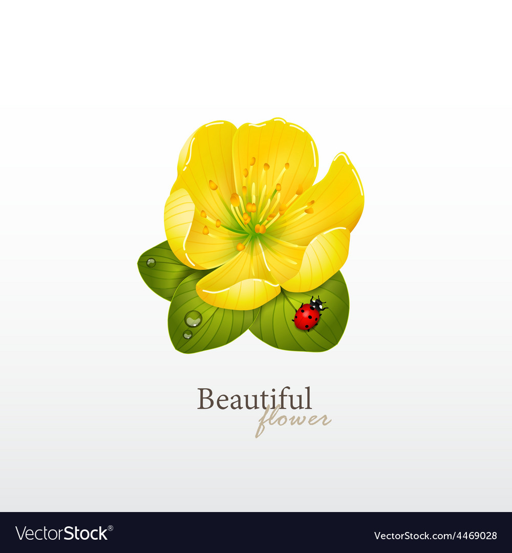 Yellow cherry flower with leaves and ladybug logo vector | Price: 1 Credit (USD $1)