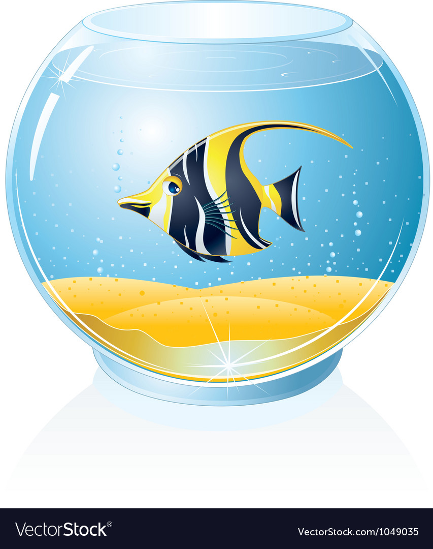 Aquarium with tropical fish vector | Price: 1 Credit (USD $1)