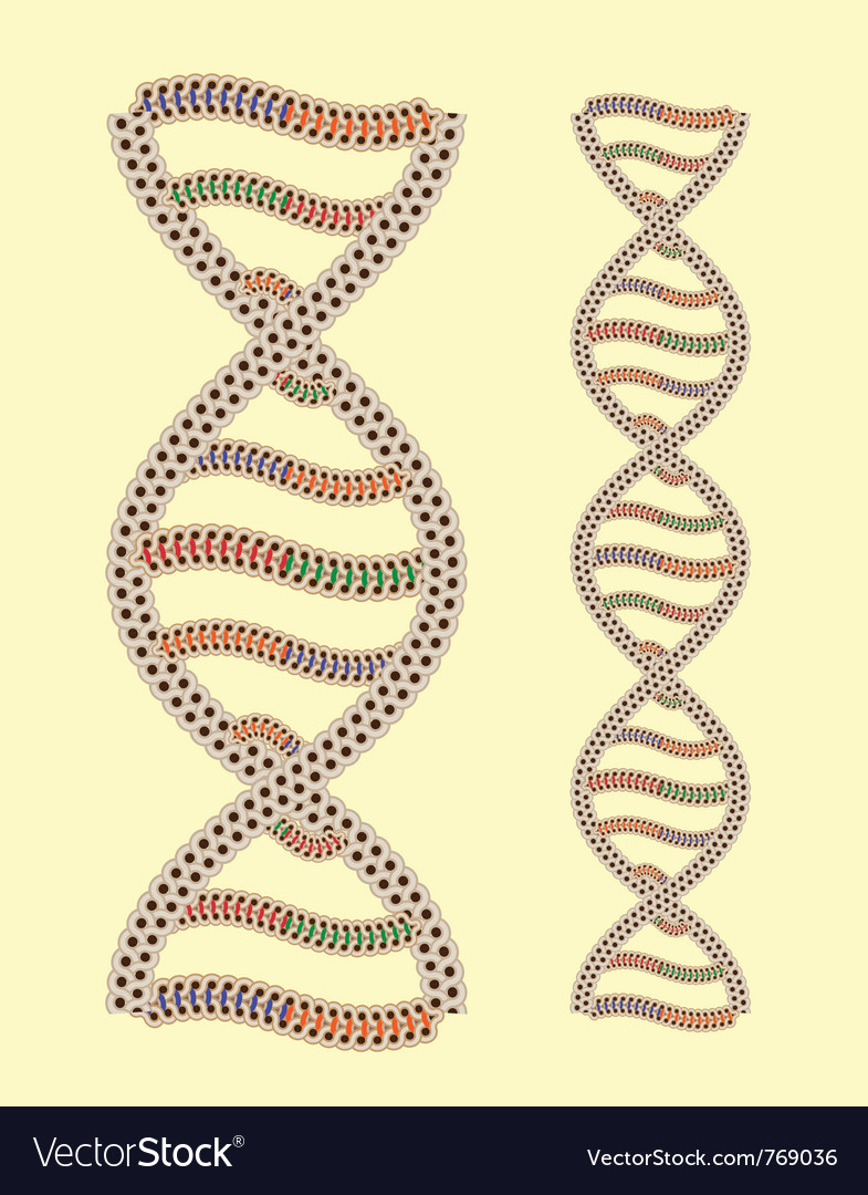 Dna as greek ornament vector | Price: 1 Credit (USD $1)