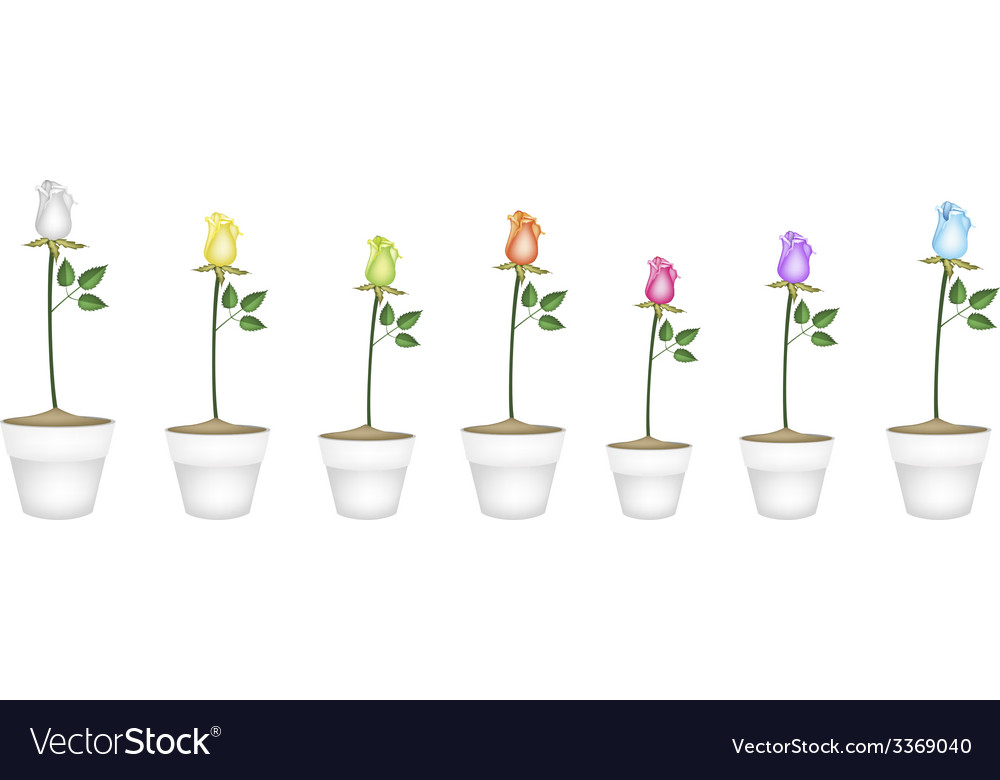 Set of roses in ceramic flower pots vector | Price: 1 Credit (USD $1)