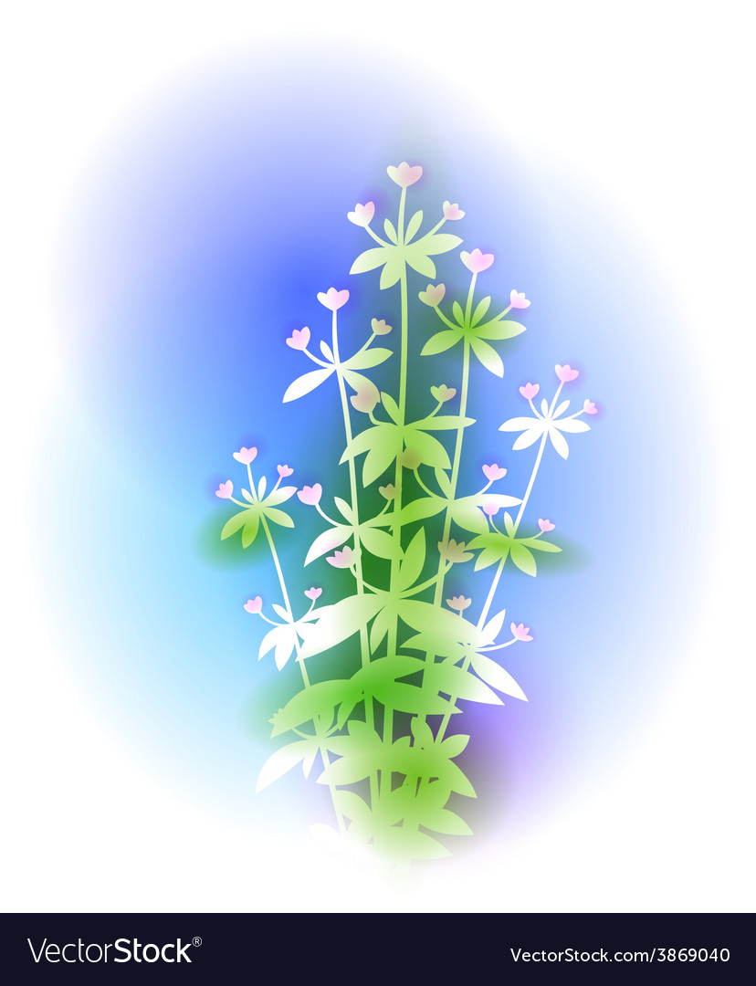 With oregano bunch vector | Price: 1 Credit (USD $1)