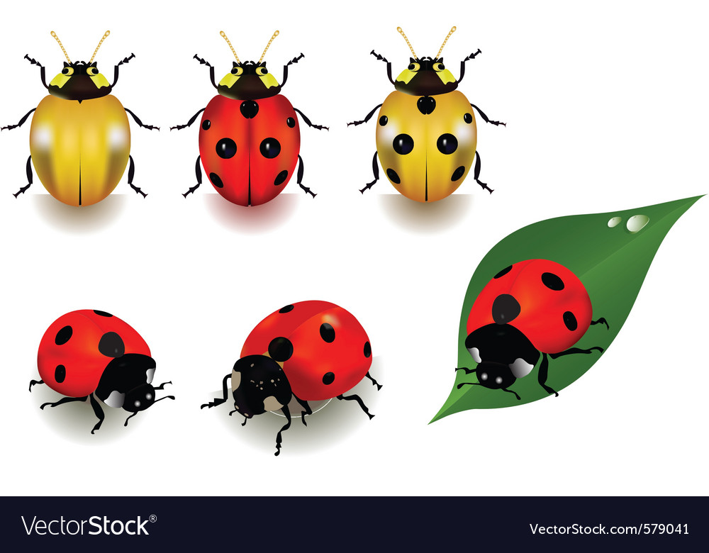 Ladybugs vector | Price: 3 Credit (USD $3)
