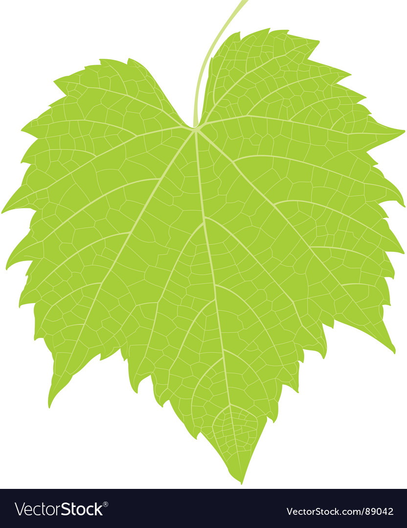 Grape leaf high detail vector | Price: 1 Credit (USD $1)