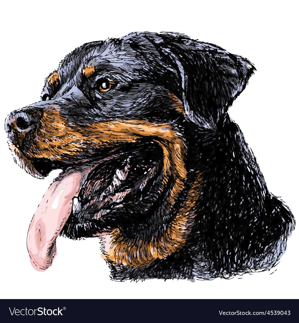 Rottweiler vector | Price: 3 Credit (USD $3)