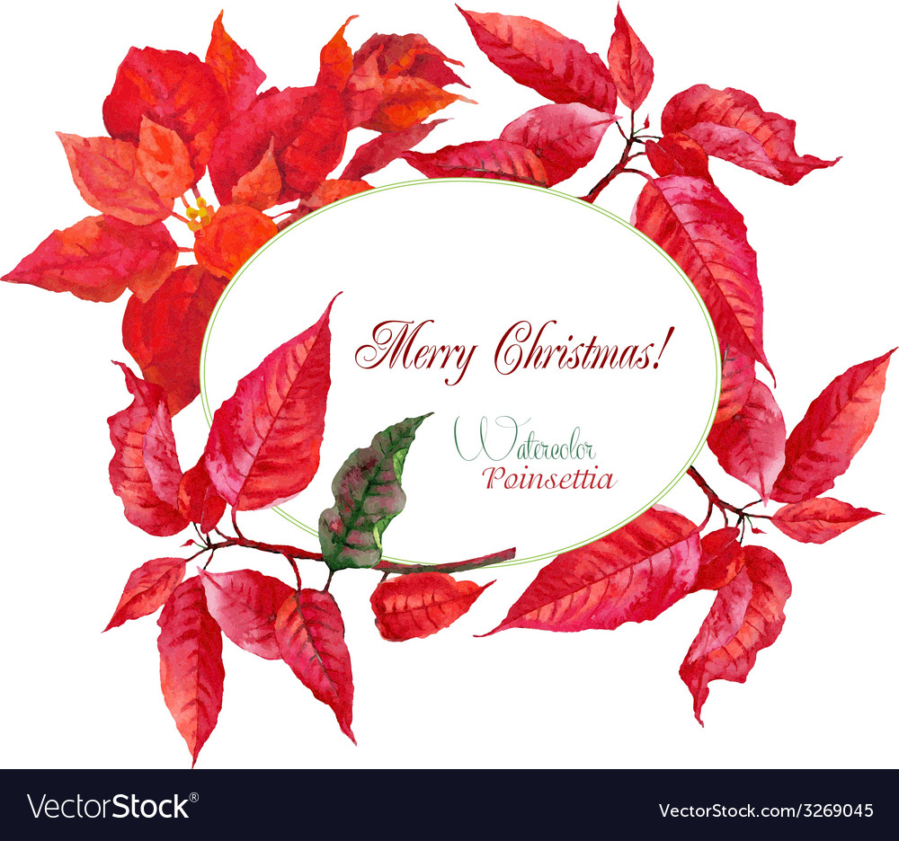 Background with red christmas poinsettia-01 vector | Price: 1 Credit (USD $1)