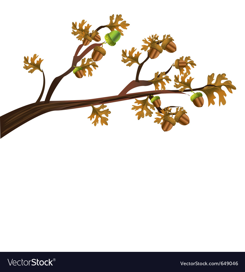 Acorn tree vector | Price: 1 Credit (USD $1)
