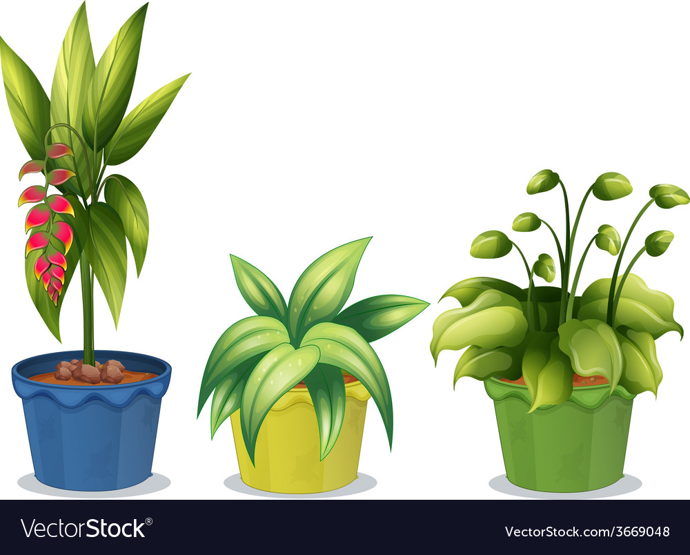 Potted plant vector | Price: 3 Credit (USD $3)