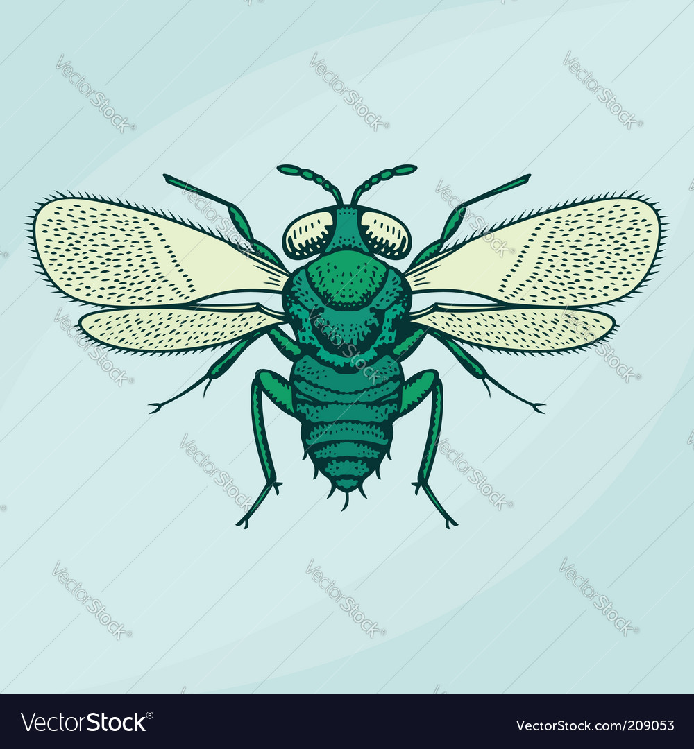 Flying insect vector | Price: 1 Credit (USD $1)